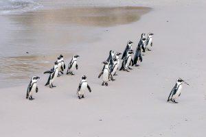 【テキスト】ペンギン
